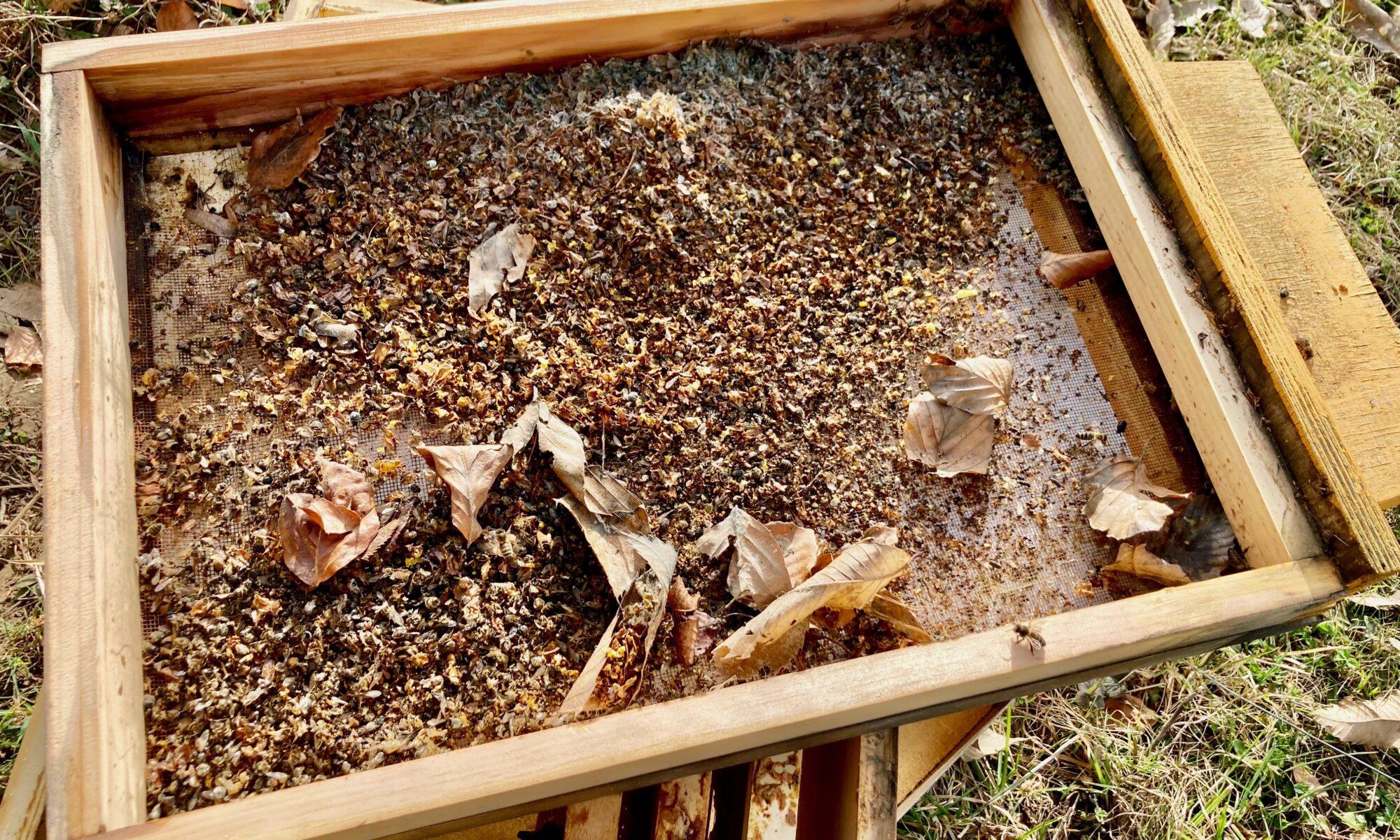 Mäusenest im Bienenstock